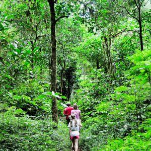 Dschungel Wanderung Baliferientours