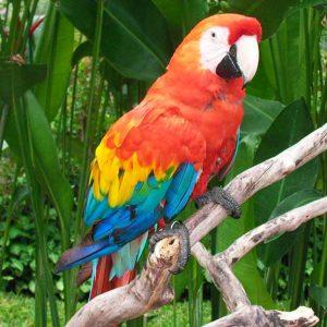 Vögel Und Reptilien Park2 Baliferientours