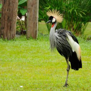 Vögel Und Reptilien Park Baliferientours