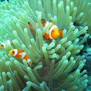 Snorkeling Menjangan Baliferientours